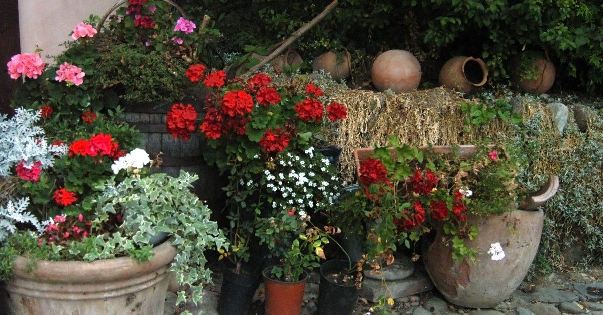 Flori din Sighisoara