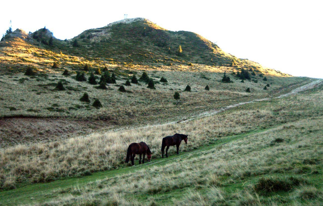Cai pascand pe traseul care duce spre Vf Ciucas