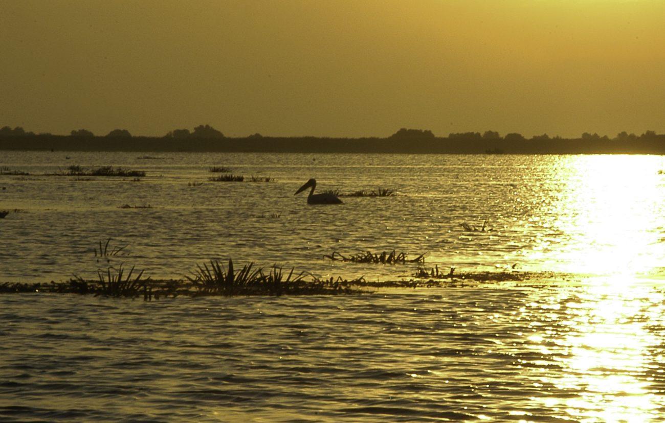 Pelican la rasarit in Delta Dunarii