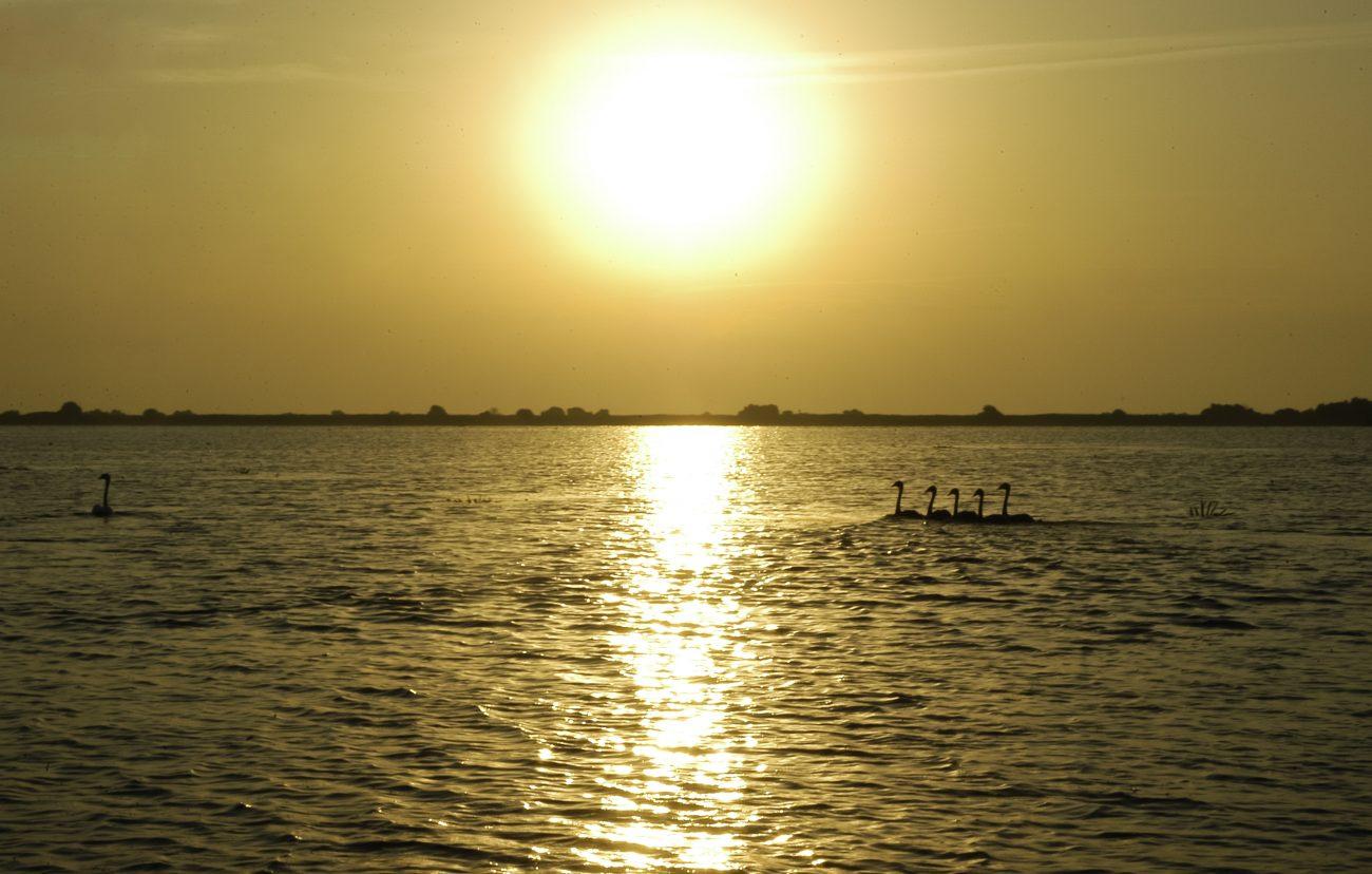 Rasarit cu pui de lebede Delta Dunarii