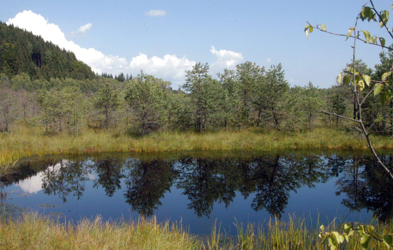 Lac Tinovul Mohosi