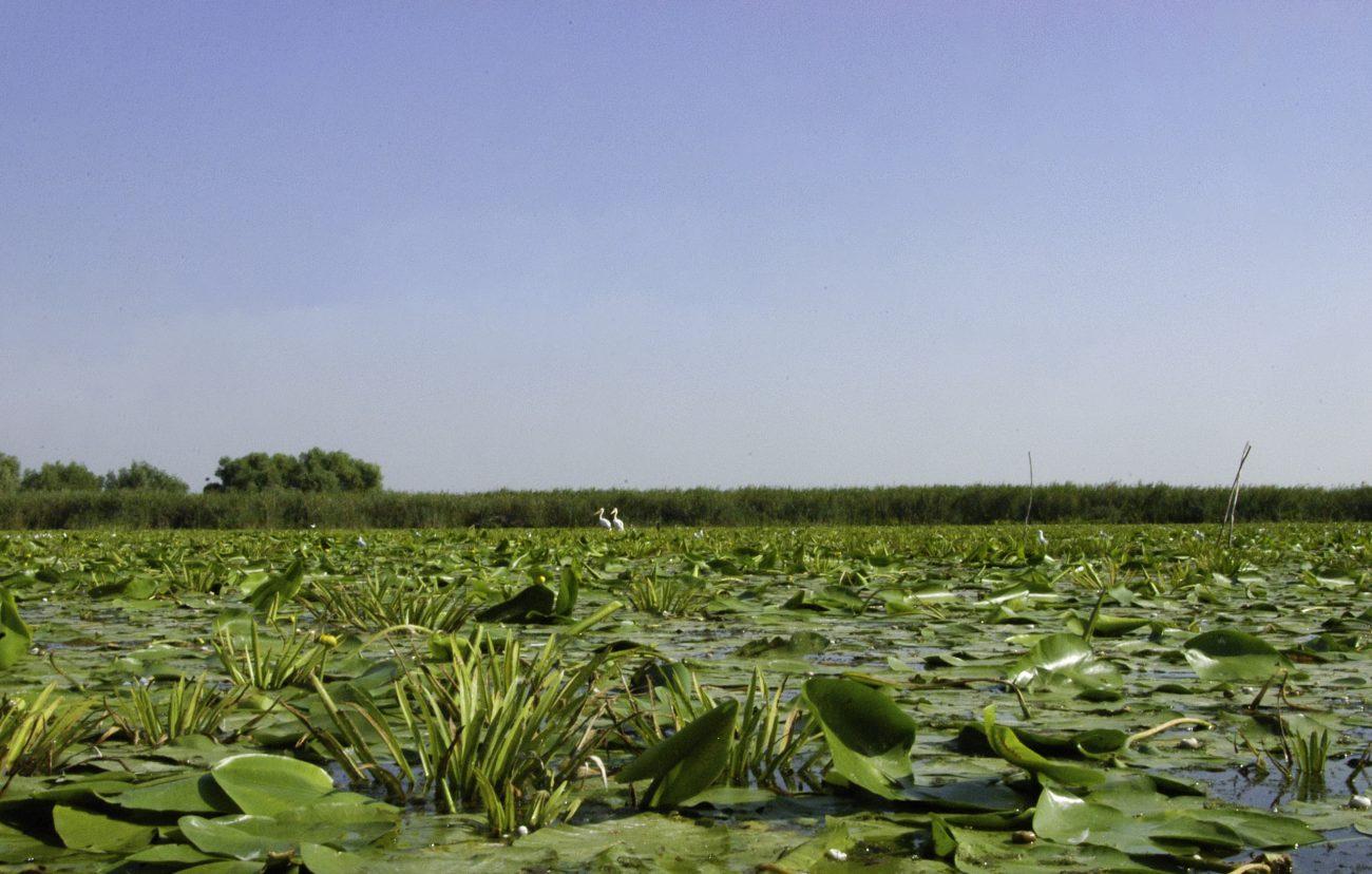 Vegetatie din canalele Deltei Dunarii