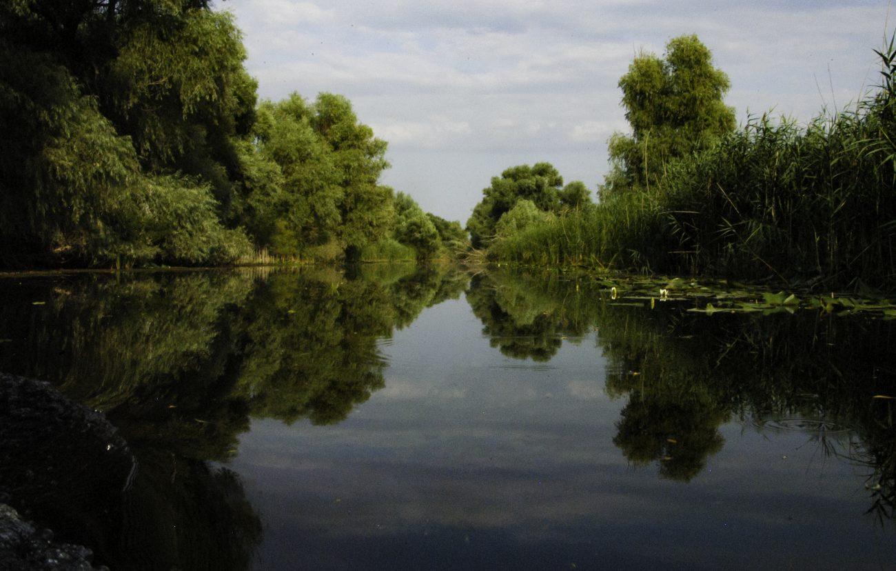 Paduri Delta Dunarii