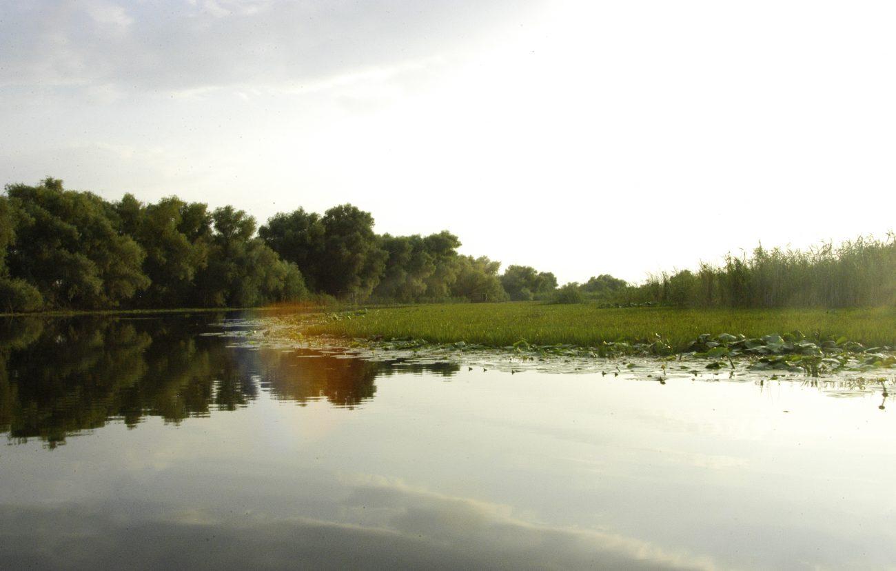 Vegetatie din Delta Dunarii