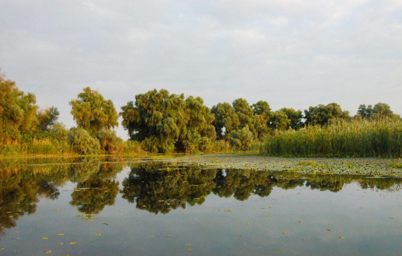 Reflexii Delta Dunarii