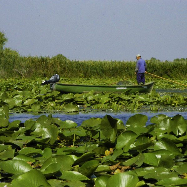 Pescar din Delta Dunarii